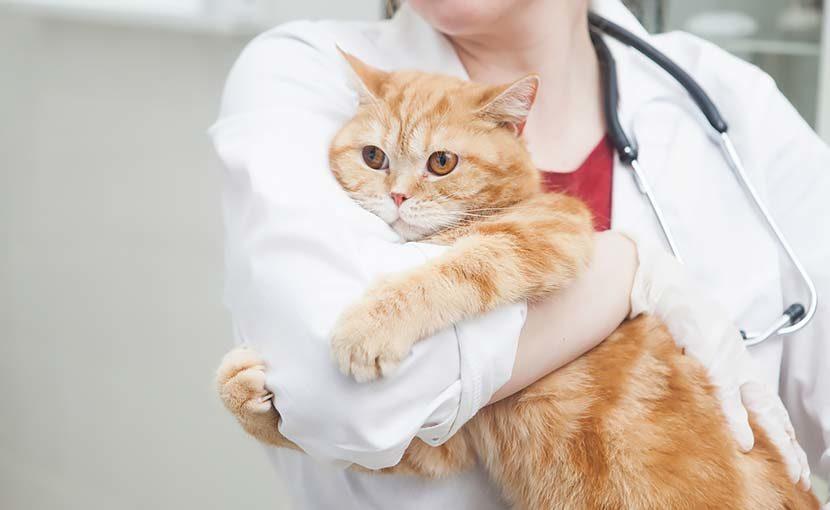 松園動物病院 求人情報