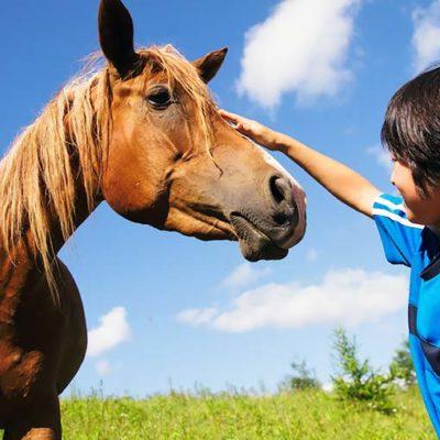 松園動物病院 動物のこと(馬のこと)