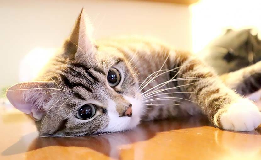 松園動物病院 動物のこと(猫のこと)