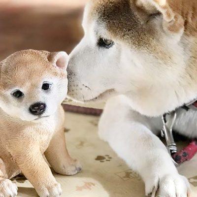 松園動物病院 動物のこと(犬のこと)