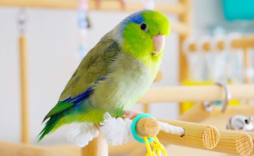松園動物病院 動物のこと(鳥のこと)