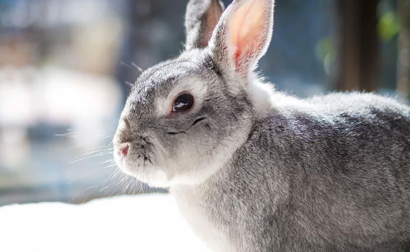 松園動物病院 動物のこと(ウサギのこと)