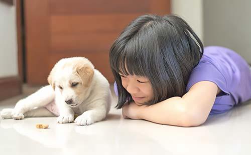 松園動物病院 パピー教室(子犬しつけ教室)