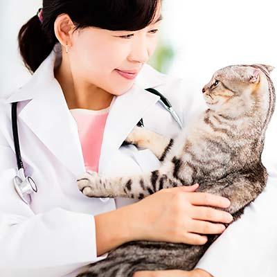 松園動物病院 診療案内